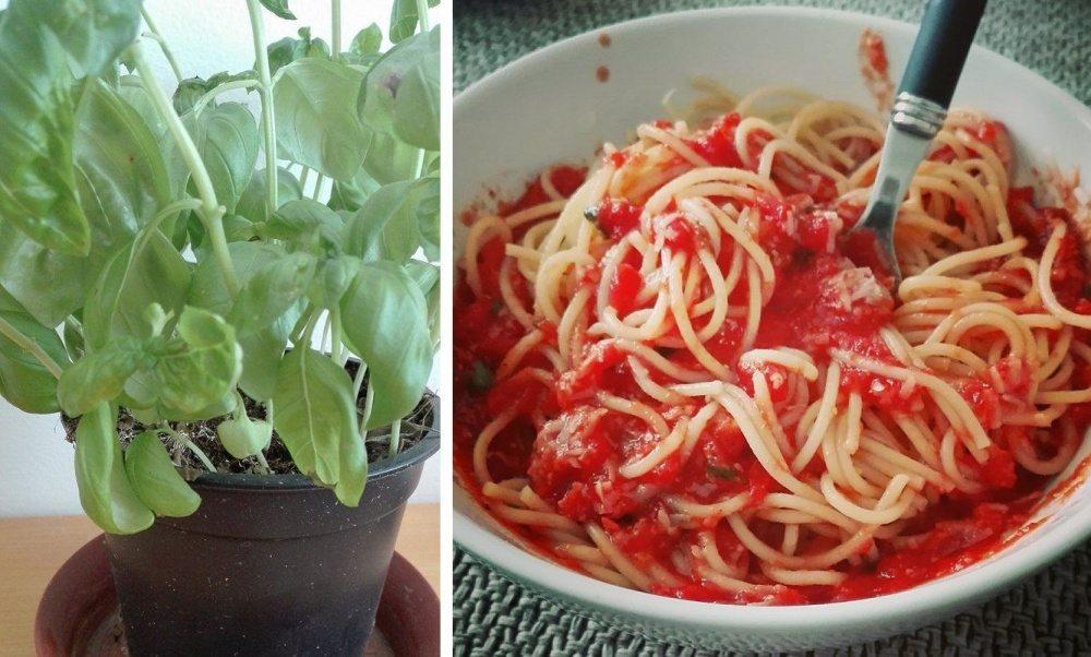 Špagety s čerstvou paradajkovou omáčkou
